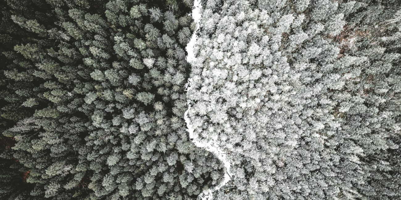 This image is a bird's eye view of a forest where half of the trees are dark and half are light.